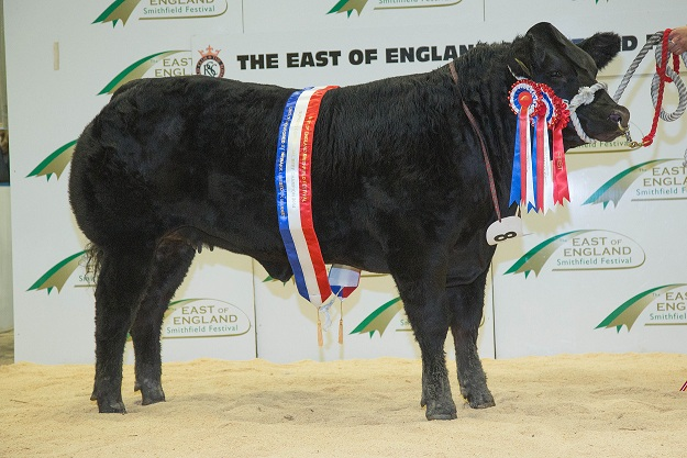 Khaleesi (sired by Swarland Eddie)