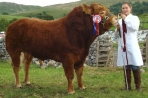Tomschoice Churchill. 2008: Male & Reserve Breed Champion Westmorland Show, Breed & Interbreed Champion Kilnsey Show, Breed Champion Malhamdale Show. Sold Carlisle Oct 2008 3,800gns.