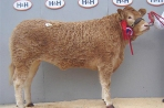 Ivaniskey Dot - Female Champion 2009