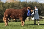 Nealford Monarch Infernos first son at 17 months old