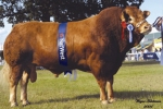 Limousin semen exported to Romania