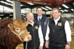 British Limousins sell to Holland in export first