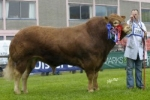Rainbow Simon son wins Supreme Championship at Carlisle as Spring Sales feature Semenstore bulls