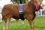 Goldies Comet son is Supreme Champion at Royal Highland 2011
