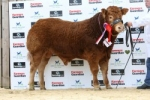 SEMENSTORE BULLS LEADING THE WAY AT STIRLING'S STARS OF THE FUTURE