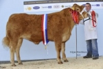 \'Spectacular\' Trueman Euphonium crowned Champion at 2011 National Limousin Show