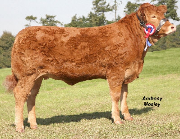 Rosecroft Chrissie born May 2007. Breed Champion  & Reserve Interbreed  Champion Royal Berks 2008.