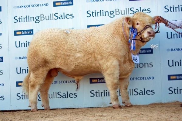 Burradon Goodfella - son sold at Stirling in Feb 2013 for 11,000gns