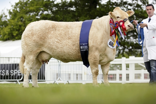 Ivaniskey Denise- RUAS CHAMPION 2014 & 2015 & Royal Highland show champion 2015